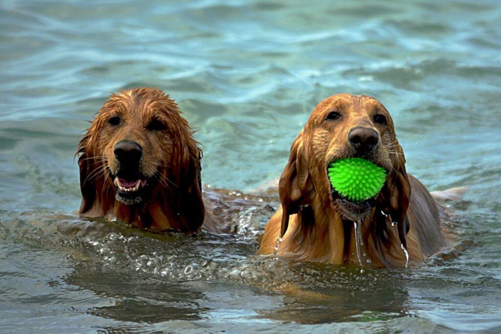 Cani in spiaggia Monte Argentario, esperienze Hotel Erasmo