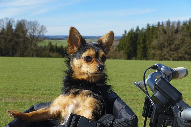 Tour in bici con cane, esperienze Hotel Erasmo