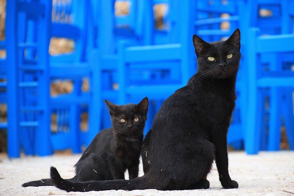 Coppia di gatti neri su sfondo blu