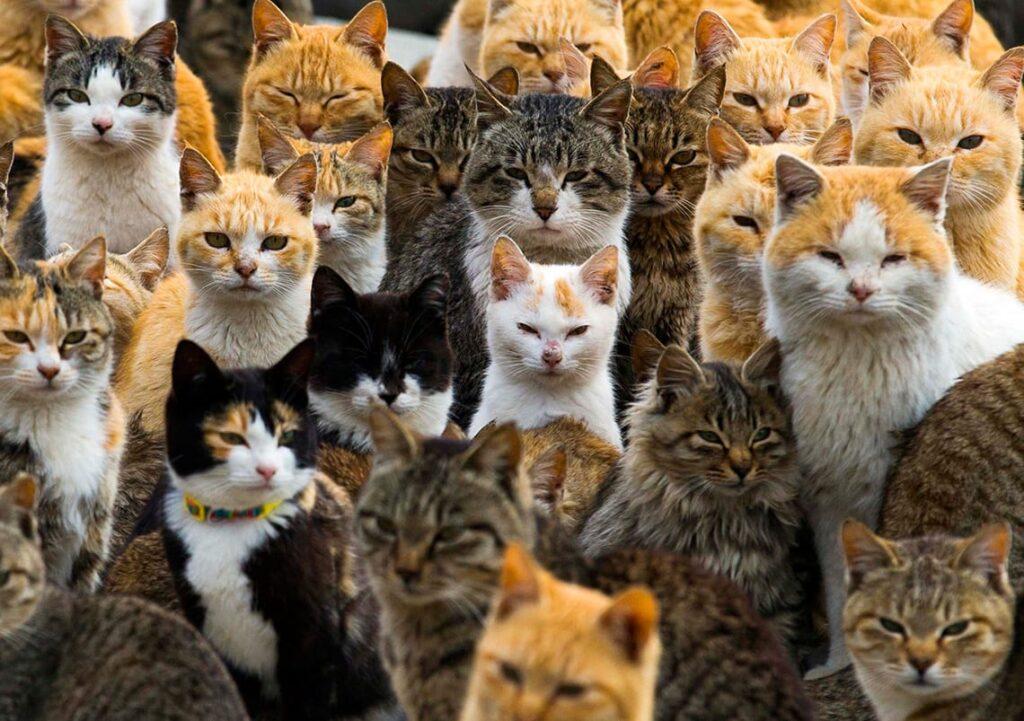 Numerosi gatti di vari colori della colonia felina dell'isola giapponese di Aoshima.