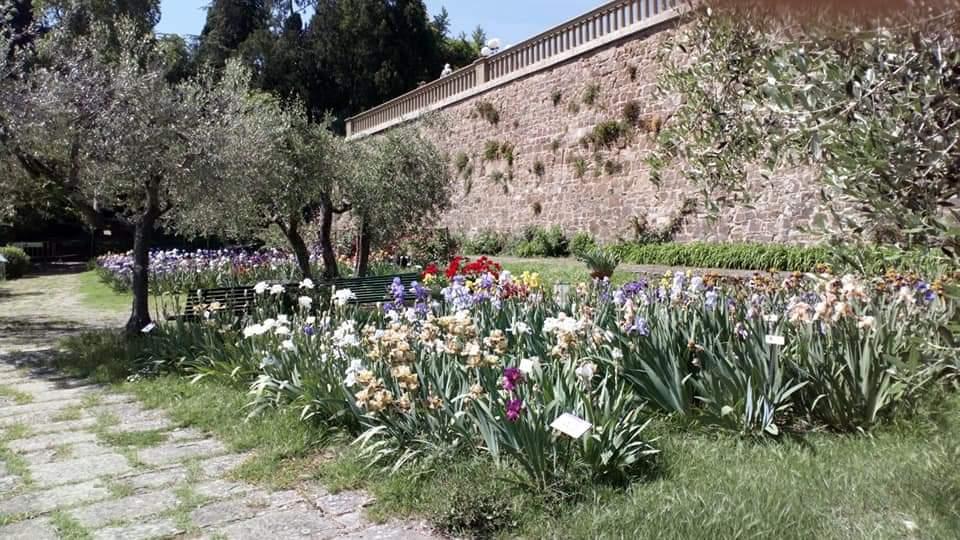giardini di Firenze_Iris